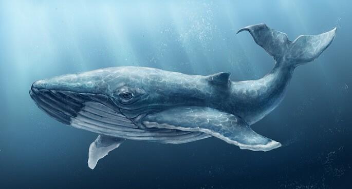 Нефть спасла китов